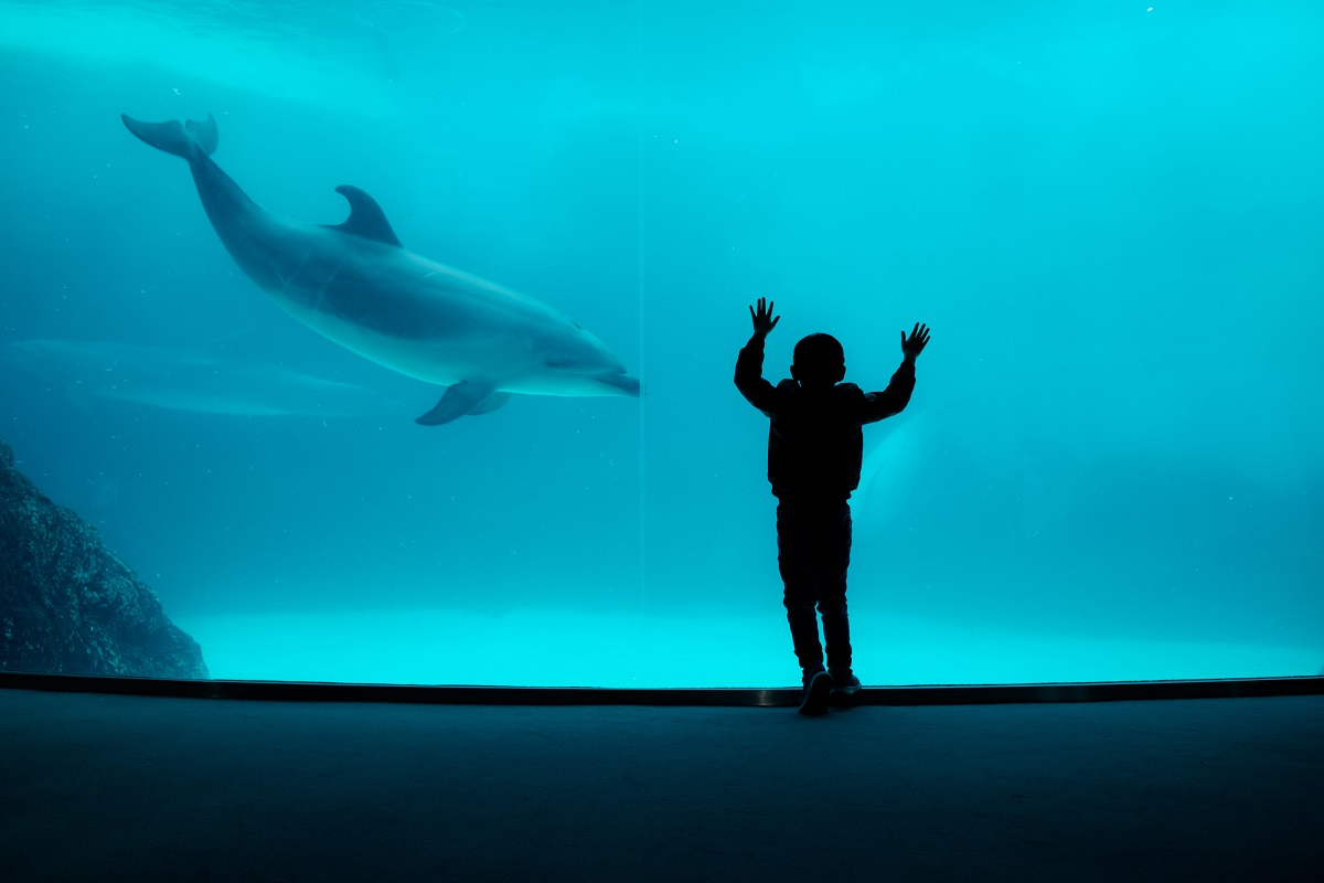 Are zoos ethical? What about aquariums and races? We explore this topic further.